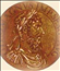 Roman Synod Deposed Pope John XII