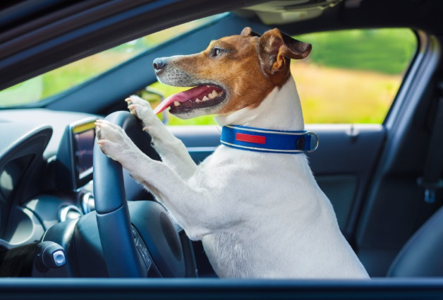 Driving Has Gone to the Dogs