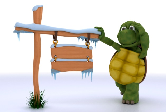 Turtle on a Fencepost