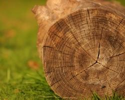 Activity: Wooden History