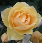 Treasures of Encouragement Blog Spotlight