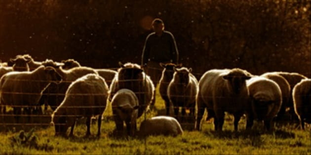 The Church Needs Shepherds, Not Coaches