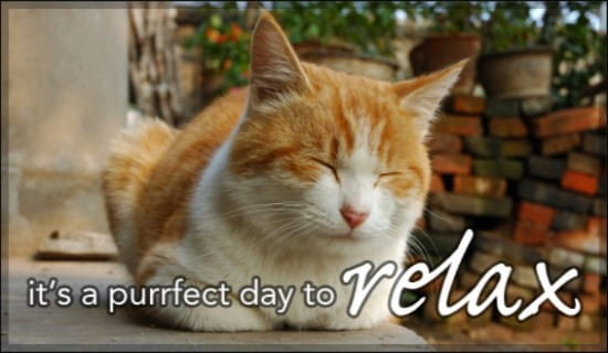 Purrfect  ecard, online card
