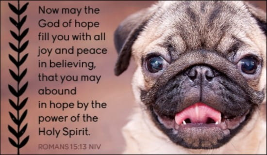 Free Romans 15 13 Ecard Email Free Personalized Animals
