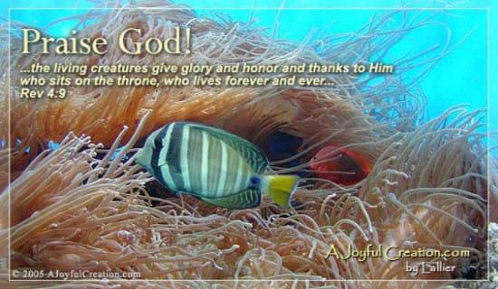 Praise God Ecard Free A Joyful Creation Greeting Cards