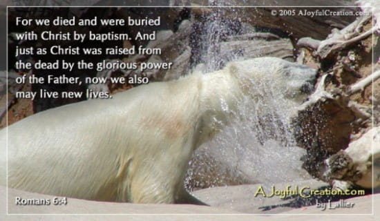 Baptism - Romans 6:4