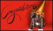 Congratulations, Puppy