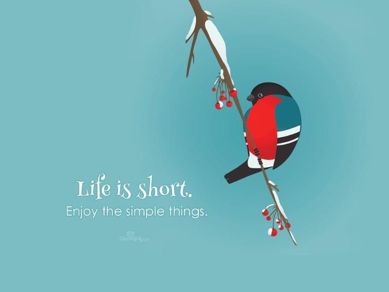 Life if Short