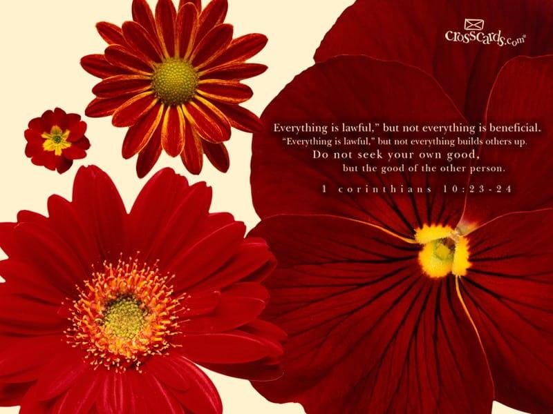 1 Corinthians 10:23-24
