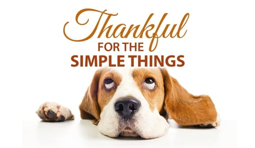 Thanksgiving ecards beautiful cards free online for The thing free online