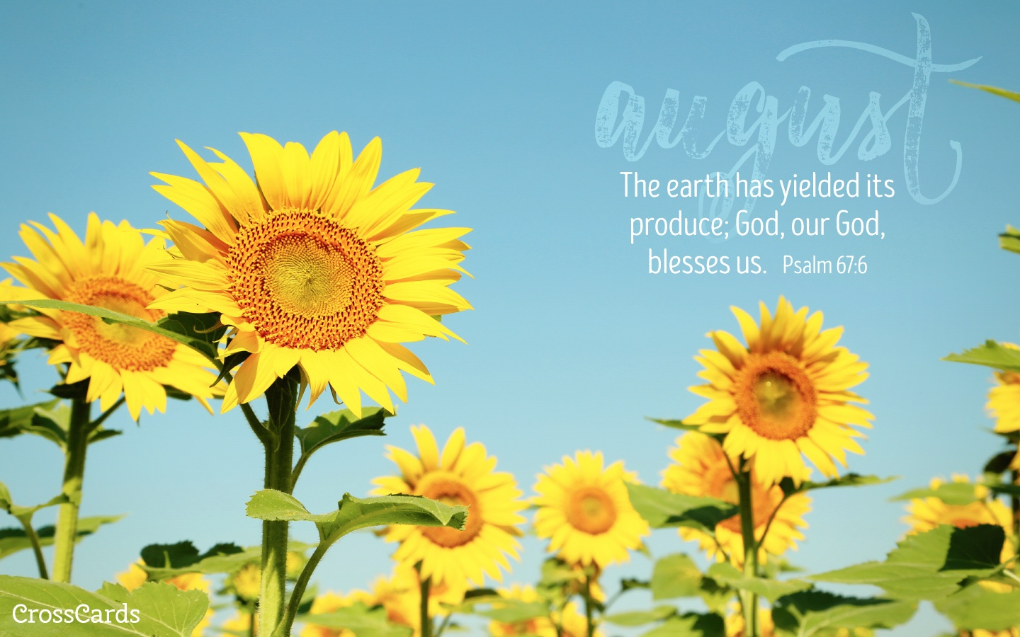 August 2016 - Sunflowers Desktop Calendar- Free August Wallpaper
