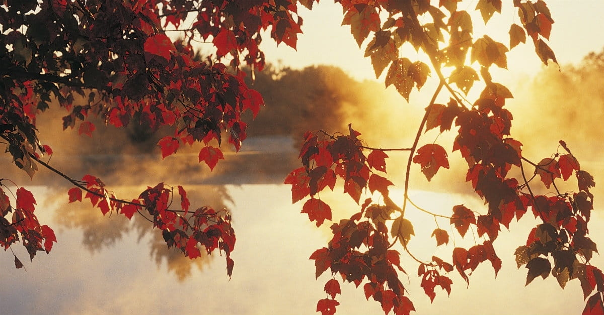 What Autumn Teaches Christians about Life, Death, and God