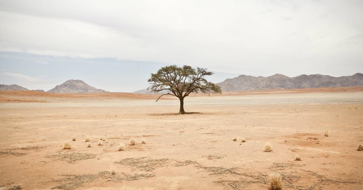 How to Survive Your Spiritual Desert