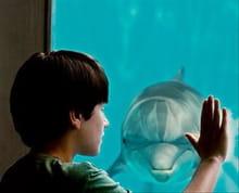 <i>Dolphin Tale</i>'s Healing Bonds Warm Hearts