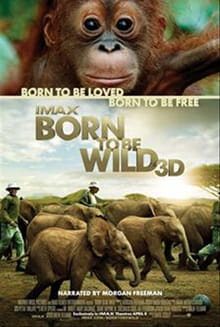 Love Takes Center Stage in <i>Born to Be Wild</i>