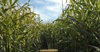 corn christian single men Confessions of a sex-starved single back then we talked about men, marriage, romance read more articles that highlight writing by christian women at.