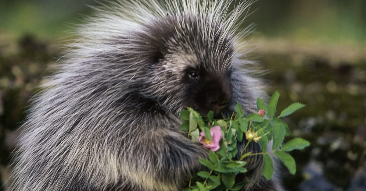 Porcupine Christianity: Why Non-Believers Keep Their Distance