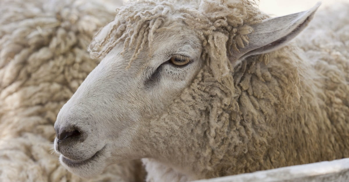 5 Ways to Recognize a Wolf in Sheep's Clothing