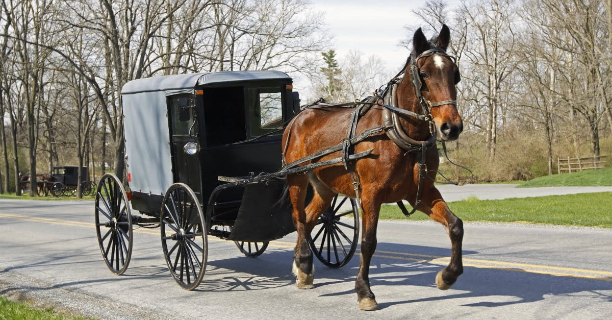 15 Things the Amish Can Teach Us about Family Life