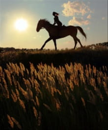 How Can a Horse Bring You Closer to God?