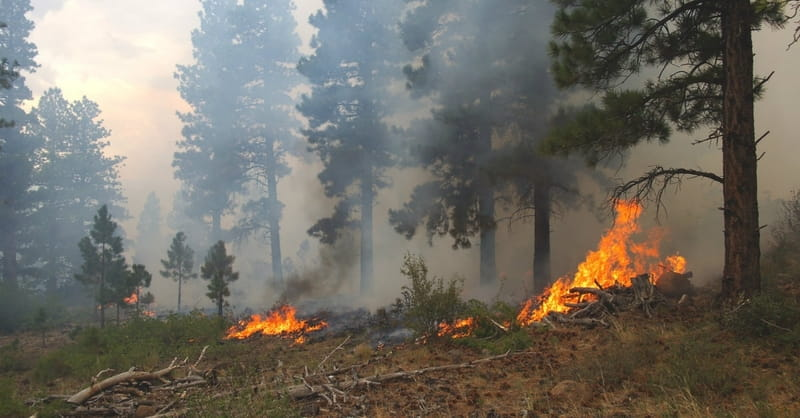 Ranchers Who Survived Wildfires Face Crippling Losses