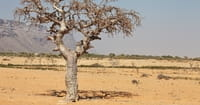 More Than 20 Million in Africa, Middle East at Risk of Starvation