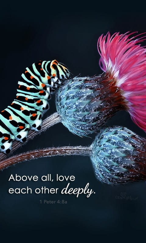 Love Each Other Deeply Desktop Wallpaper - Free Animals Backgrounds