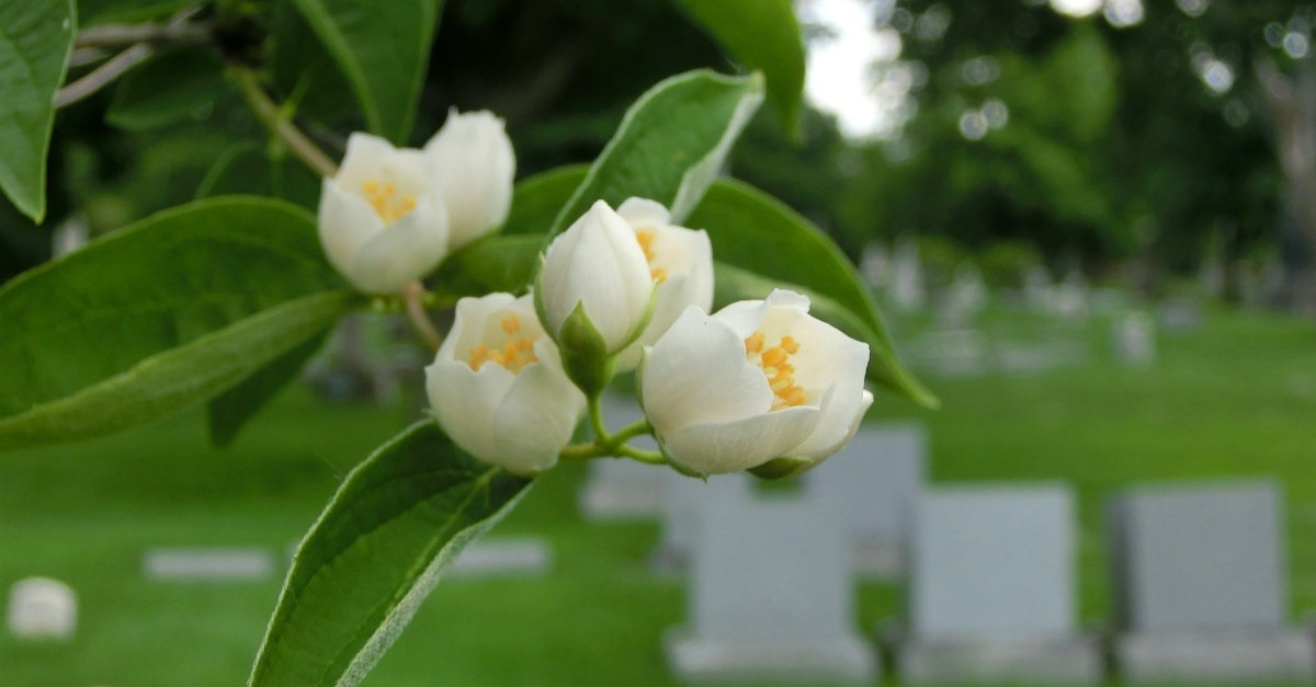 10 Things to Know about Death, Burial & Cremation