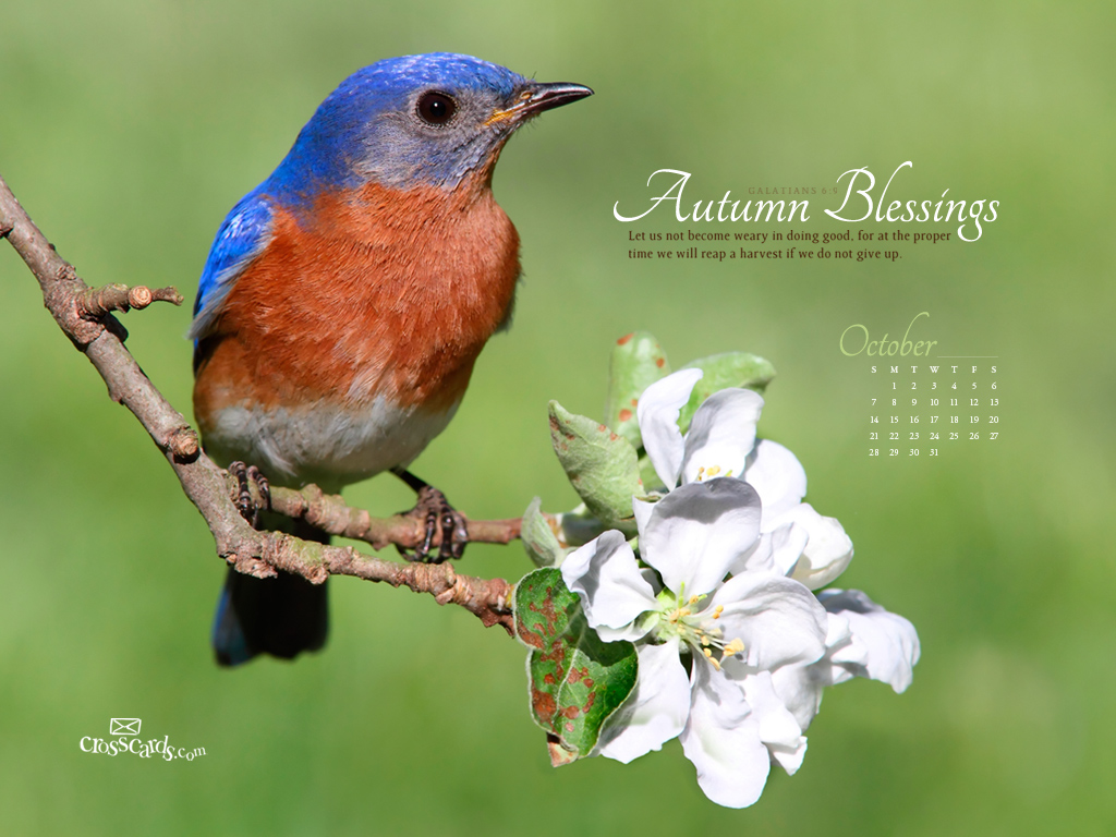 Oct 2012 Bird