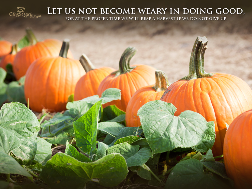 Image result for fall scripture