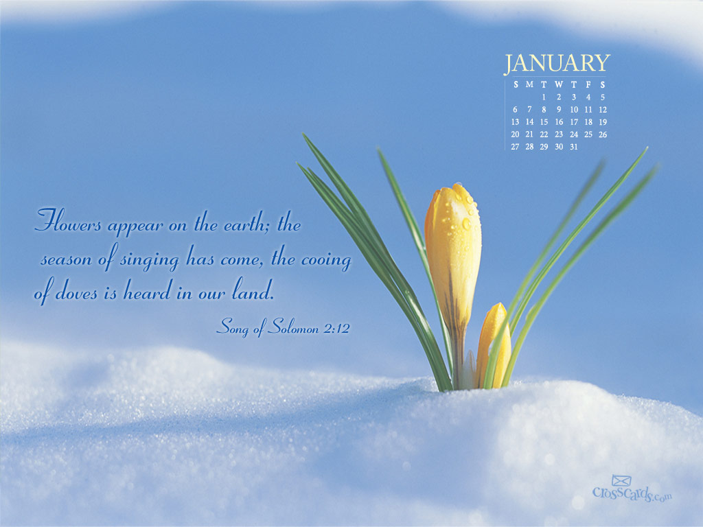 Jan 2013 - Flowers - Wallpaper