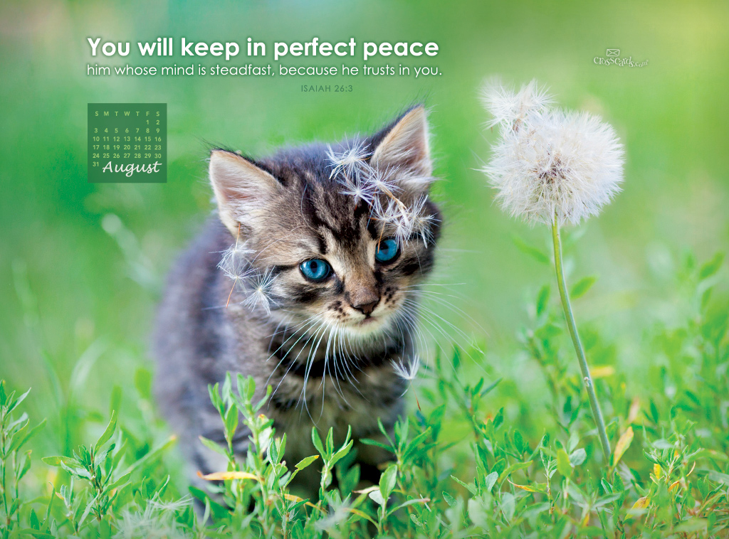 August 2014 - Perfect Peace