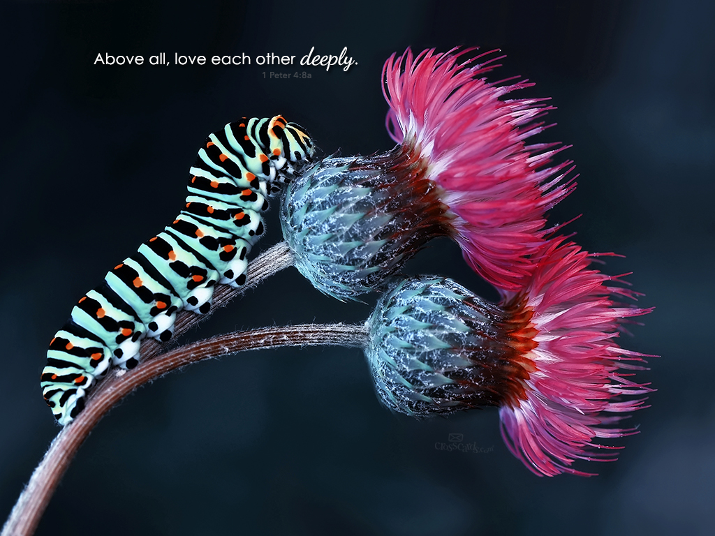 Love Each Other Deeply: Love Each Other Deeply Desktop Wallpaper