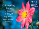 April 2013 - Ecc 3:1 NKJV - Wallpaper