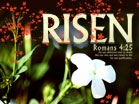 Risen - Wallpaper