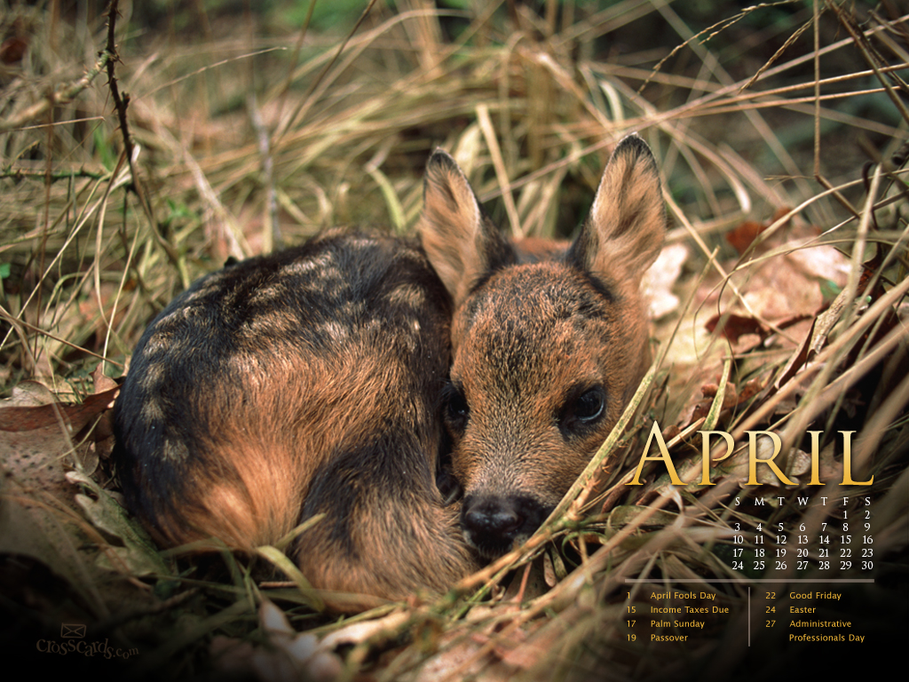 April 2011 Deer Wallpaper