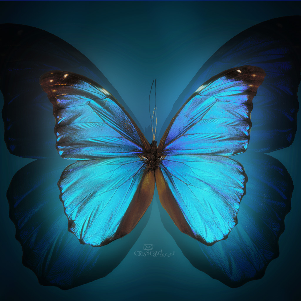 butterfly wallpaper download free christian mobile wallpaper wallpaper