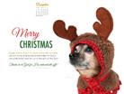 December 2014 - Christmas Dog