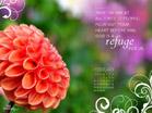 Feb 2012 - Refuge