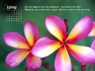 May 2013 - Psalm 30:5 NKJV - Wallpaper