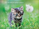 May 2015 - Perfect Peace