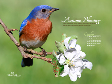 Oct 2012 Bird - Wallpaper