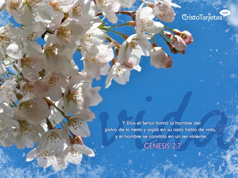 Fondos De Pantalla Versículos De Las Escrituras Gratis Vida