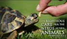 Care for Animals - Ecard