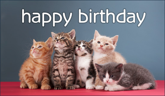 Free Birthday Kittens eCard - eMail Free Personalized Birthday    Funny Happy Birthday Kitten