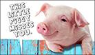Piggy Misses You