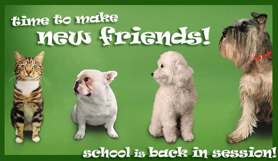 Time To Make New Friends!