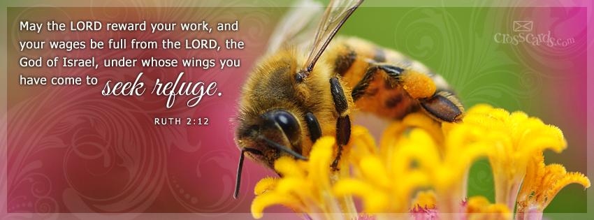 Seek Refuge