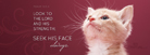 Seek His Face - Facebook Cover