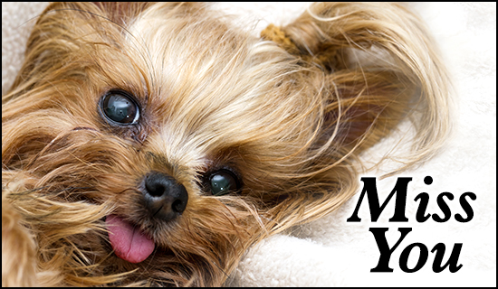 Miss You I Miss You Love Cards eCard - Free Christian Ecards Online    I Miss You Yorkie